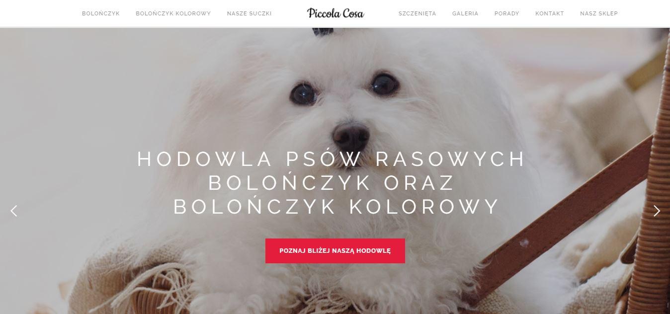 Hodowla Bolończyków i Rosyjskiej Bolonki Korowej - PICCOLA COSA FCI